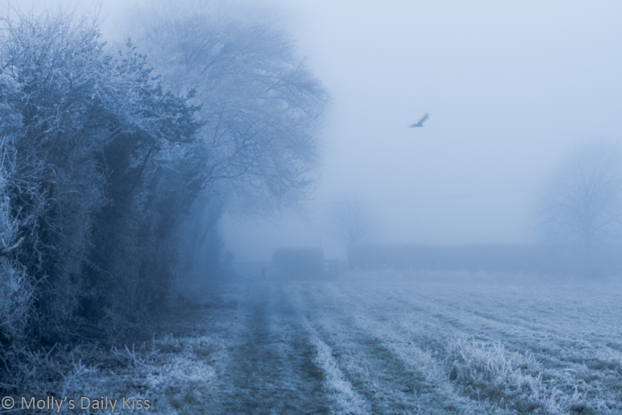 rural winter frost and fog fields